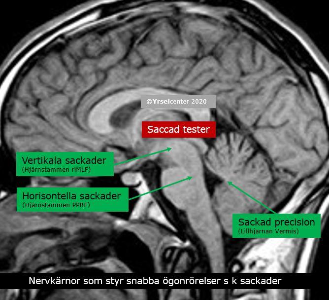 Test på lillhjärna och hjärnstam vid balanssymtom